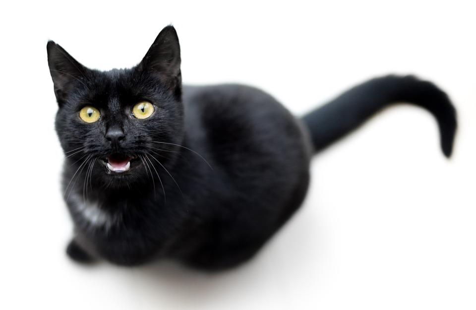 Cosa Dice Il Tuo Gatto 6 Suoni Felini E Il Loro Significato