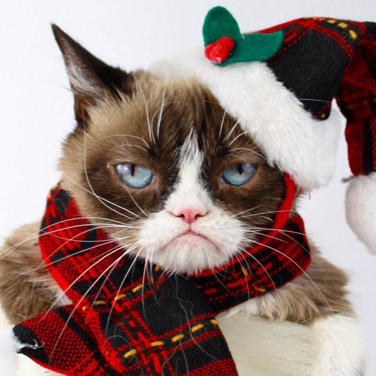 grumpy cat (1)