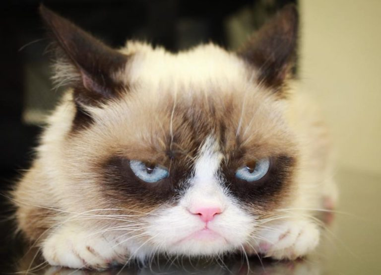 grumpy cat (10)