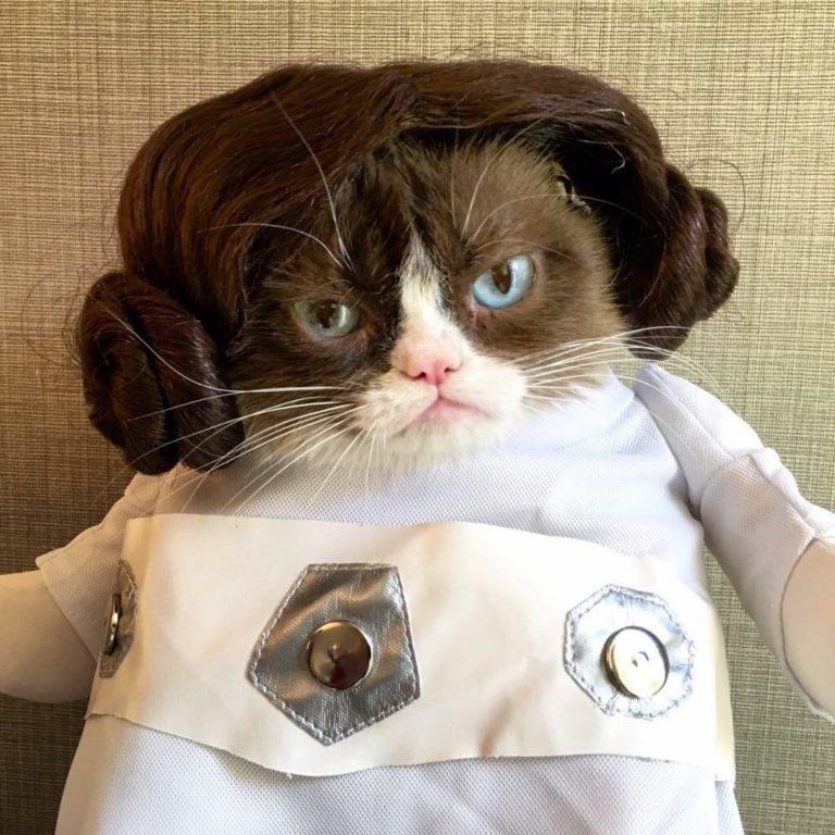 grumpy cat (2)