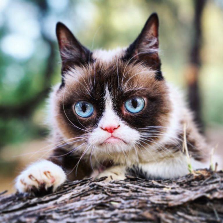 grumpy cat (3)