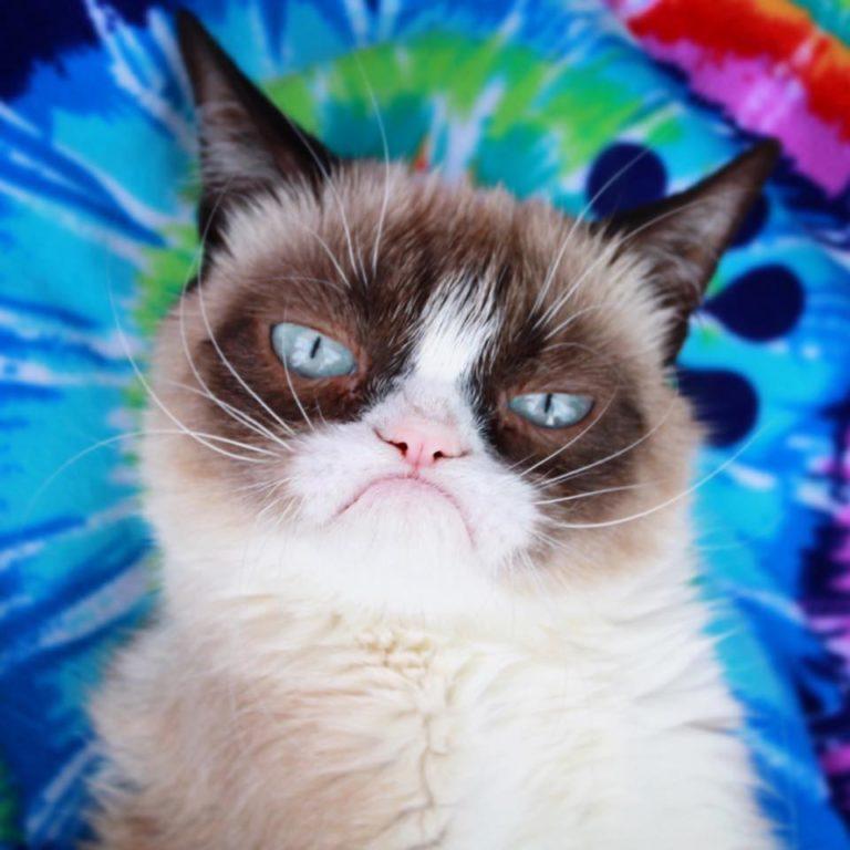 grumpy cat (4)