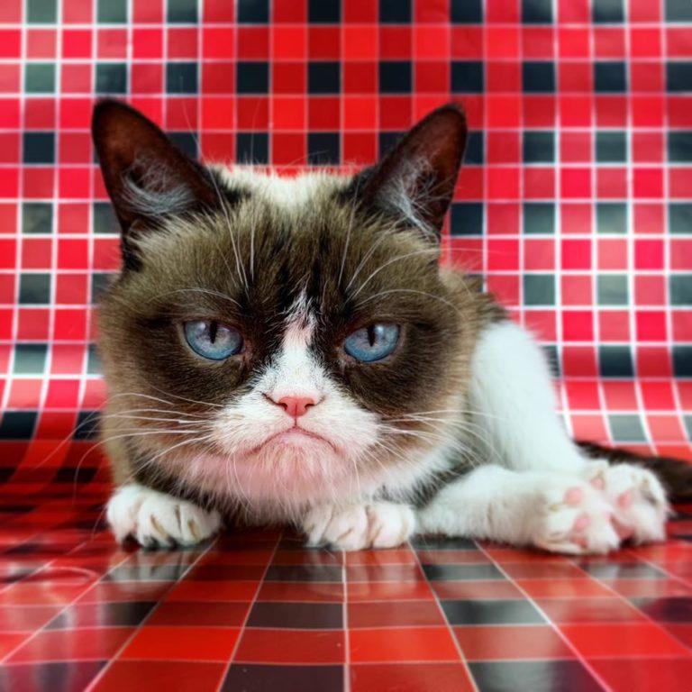 grumpy cat (5)