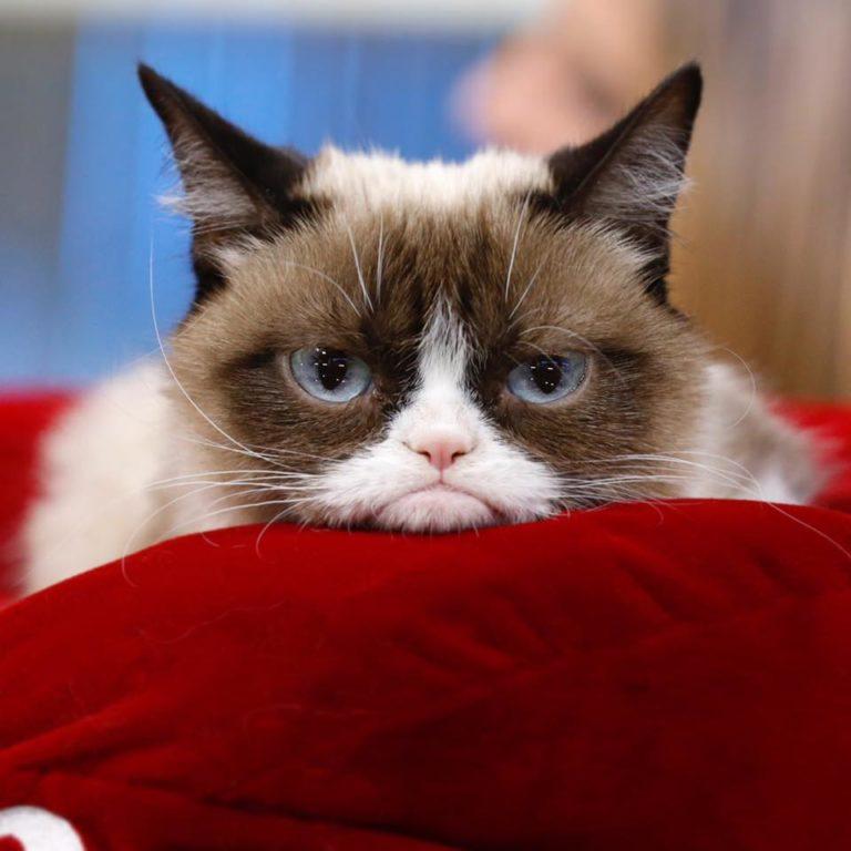 grumpy cat (6)
