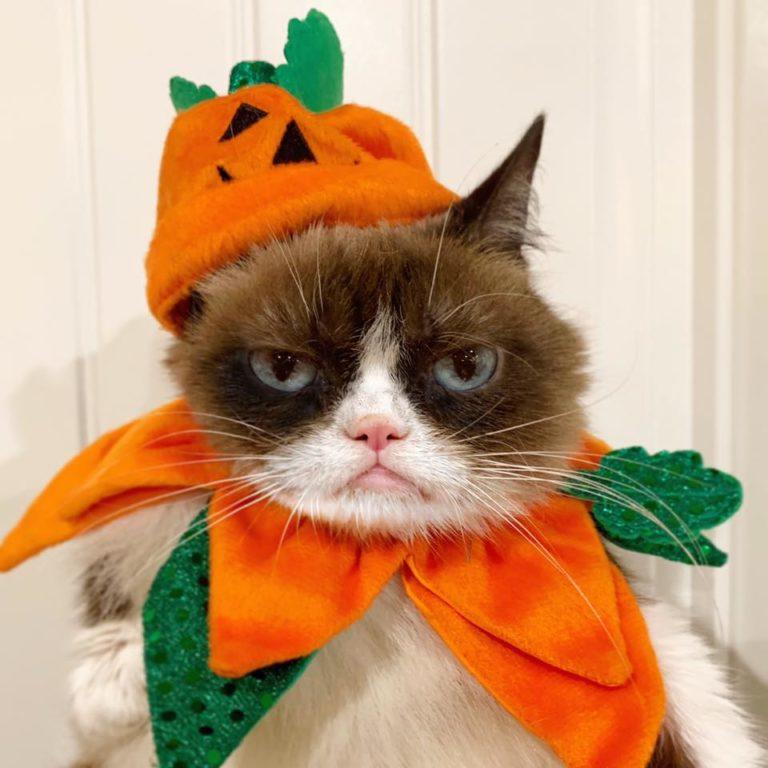 grumpy cat (7)