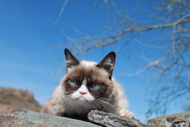 grumpy cat (9)