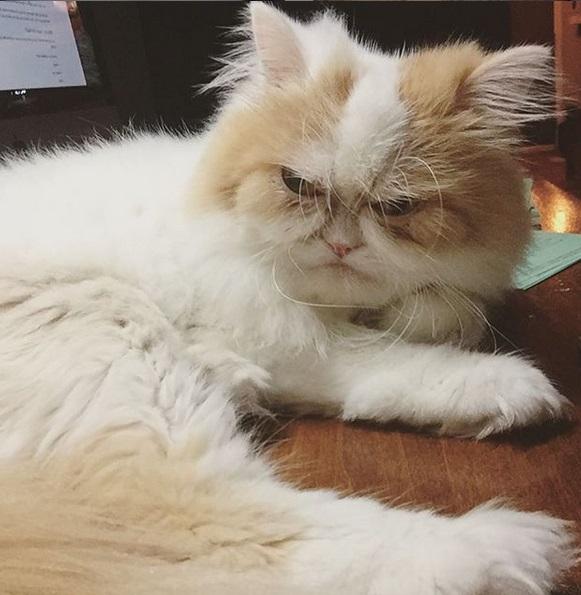 gatto imbronciato 2