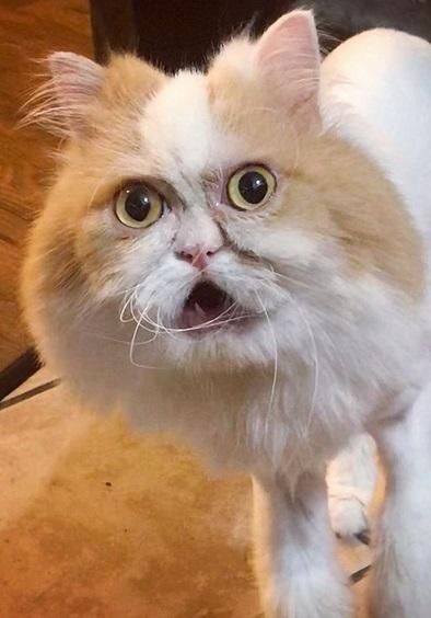 gatto louis 23e