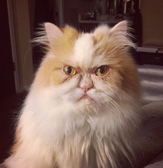 gatto louis 23eewe