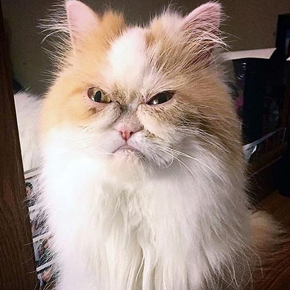 gatto louis