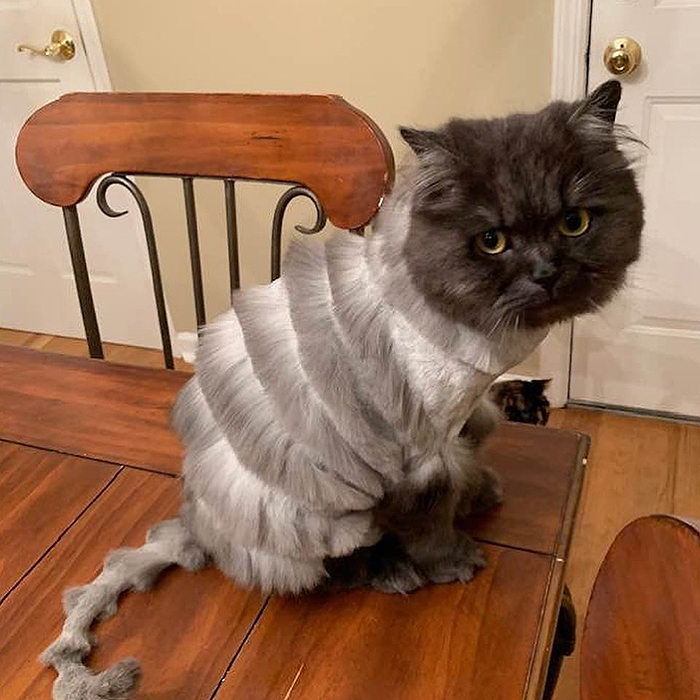 oliver-cat-weird-haircut-5d034e4c31799__700