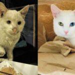 animali adozione (2)