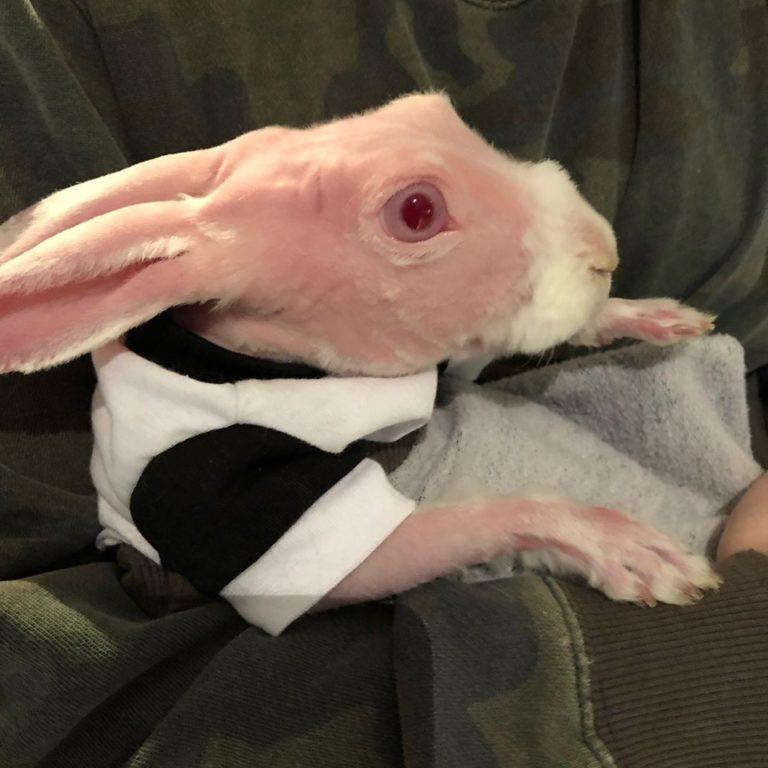 coniglio (11)