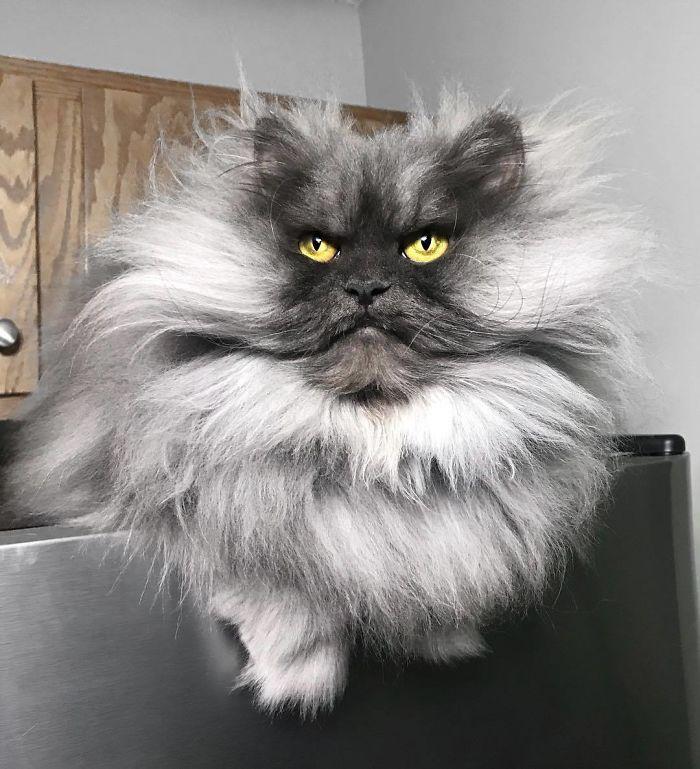 gatto juno (1)