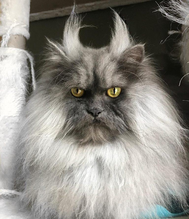 gatto juno (10)