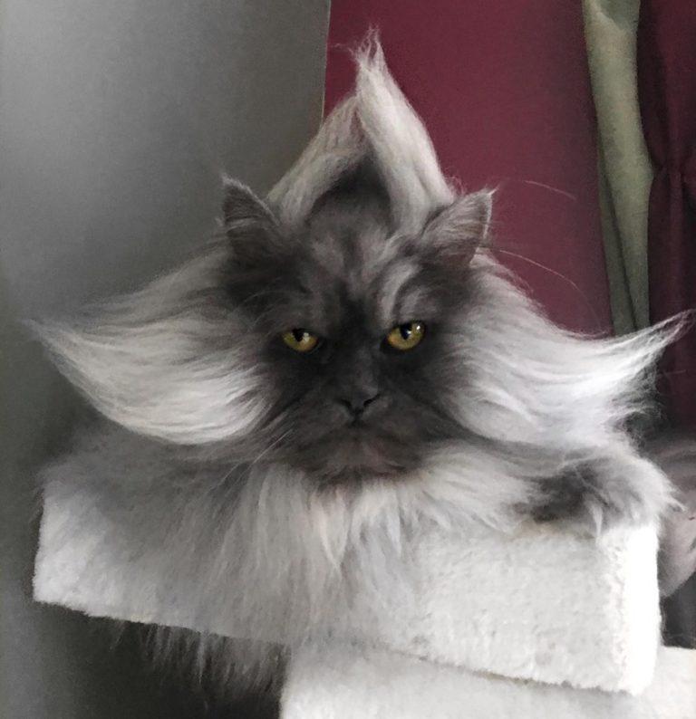gatto juno (11)