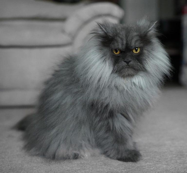 gatto juno (13)