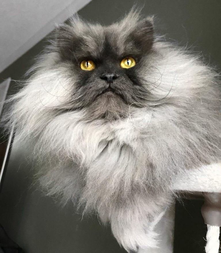 gatto juno (3)