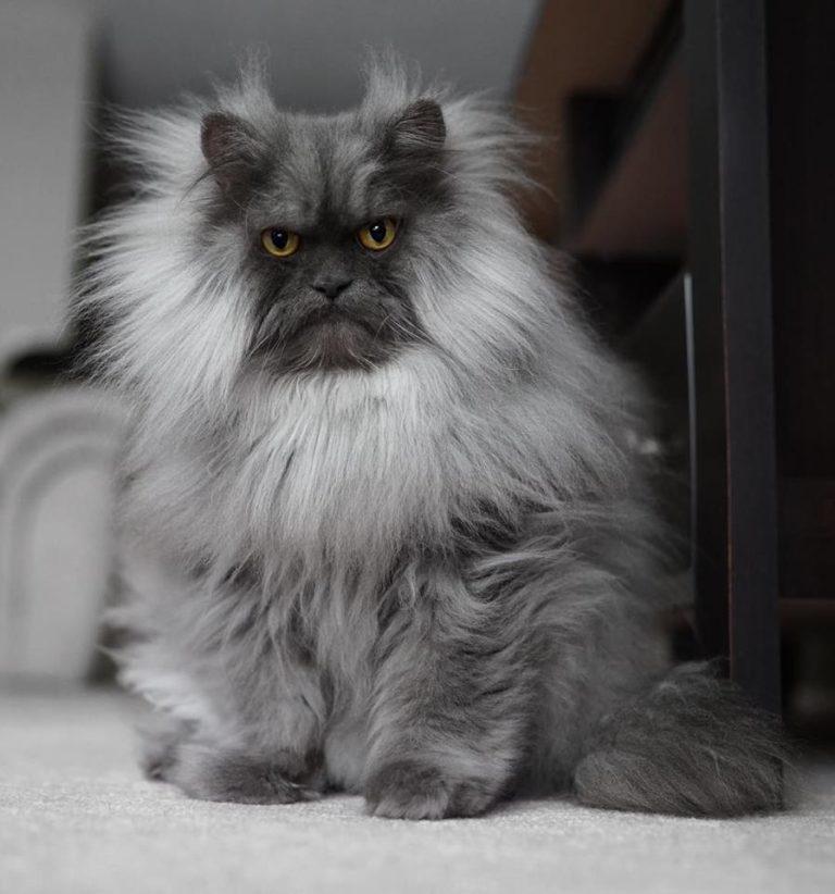gatto juno (4)