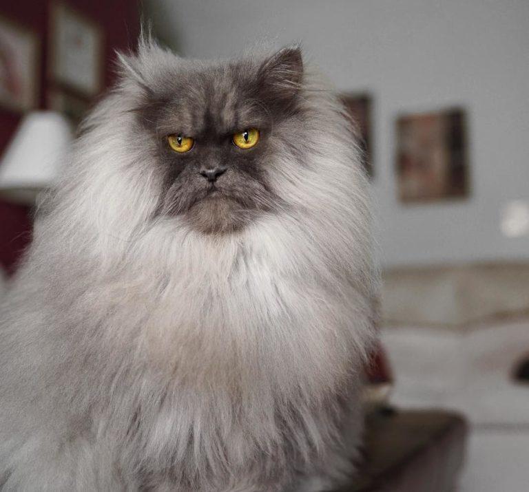 gatto juno (5)
