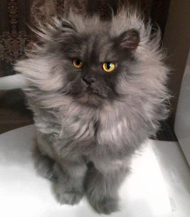 gatto juno (8)