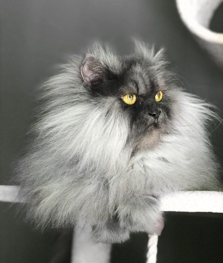 gatto juno (9)