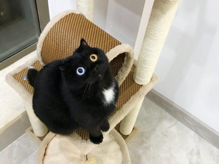niu nai gatto (1)