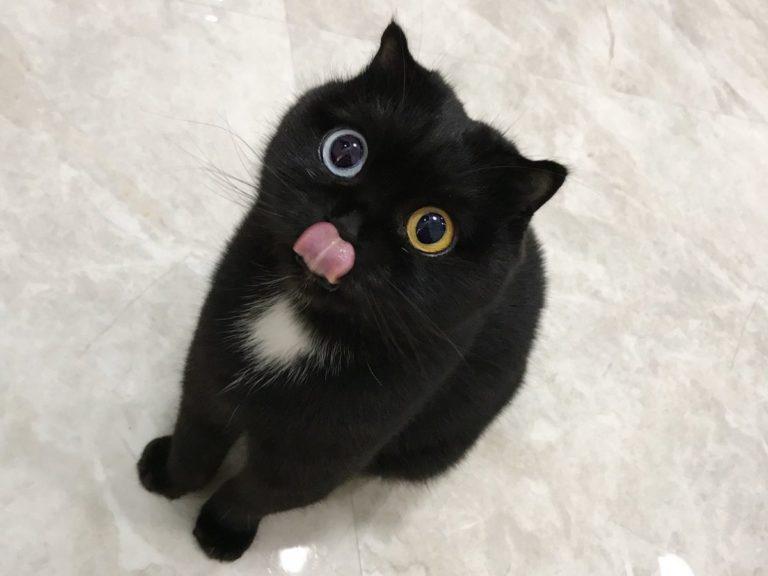 niu nai gatto (2)