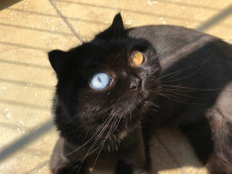 niu nai gatto (6)