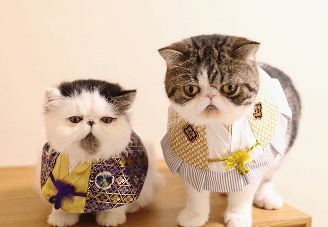 gatto zuu (1)