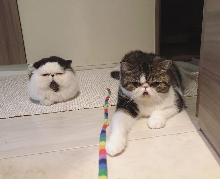 gatto zuu (10)