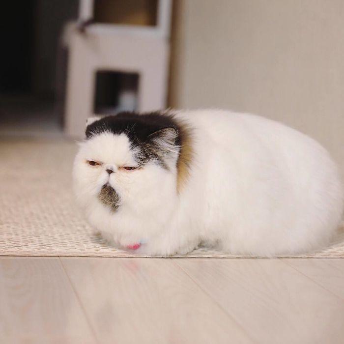 gatto zuu (11)