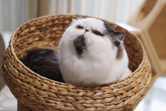 gatto zuu (12)