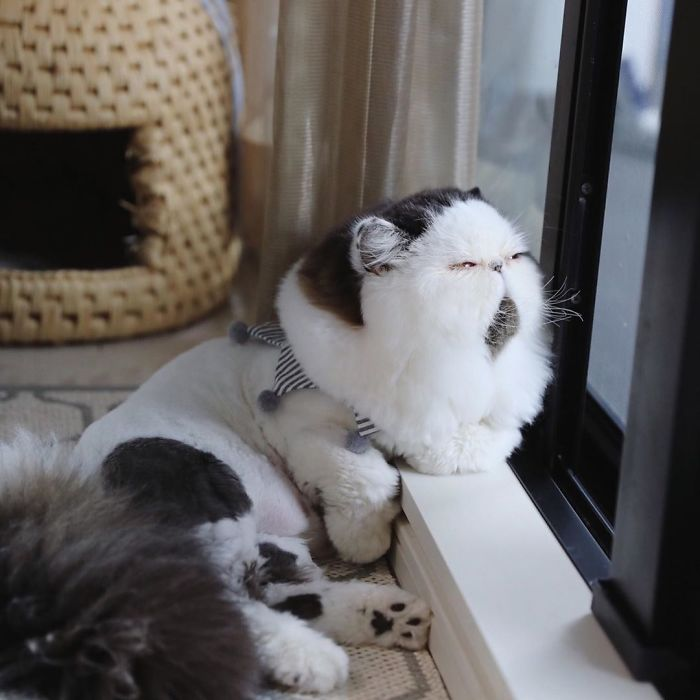 gatto zuu (15)