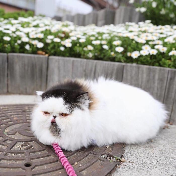 gatto zuu (6)