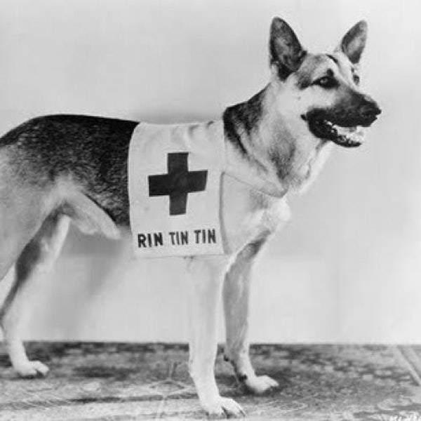 Rin Tin Tin, protagonista di numerosi film realizzati tra gli Anni 20 e 30