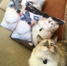 gatti divertenti (1)