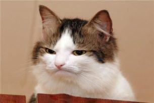 gatti divertenti (11)