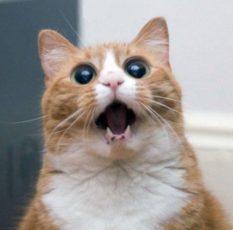 gatti divertenti (12)