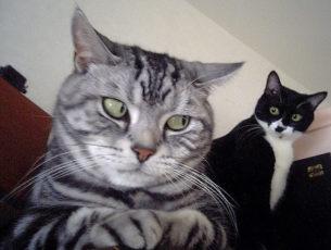 gatti divertenti (14)