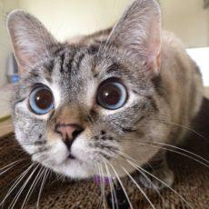 gatti divertenti (15)