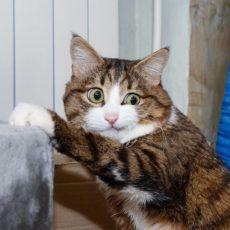 gatti divertenti (16)