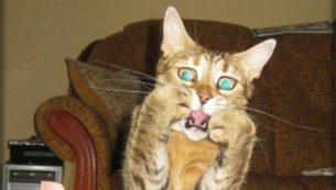 gatti divertenti (20)