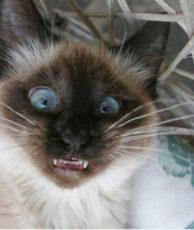 gatti divertenti (23)