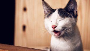 gatti divertenti (25)