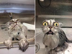 gatti divertenti (27)