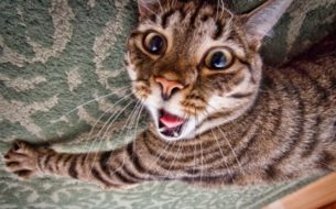 gatti divertenti (31)