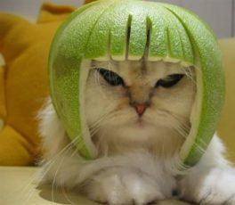 gatti divertenti (4)