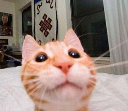 gatti divertenti (8)