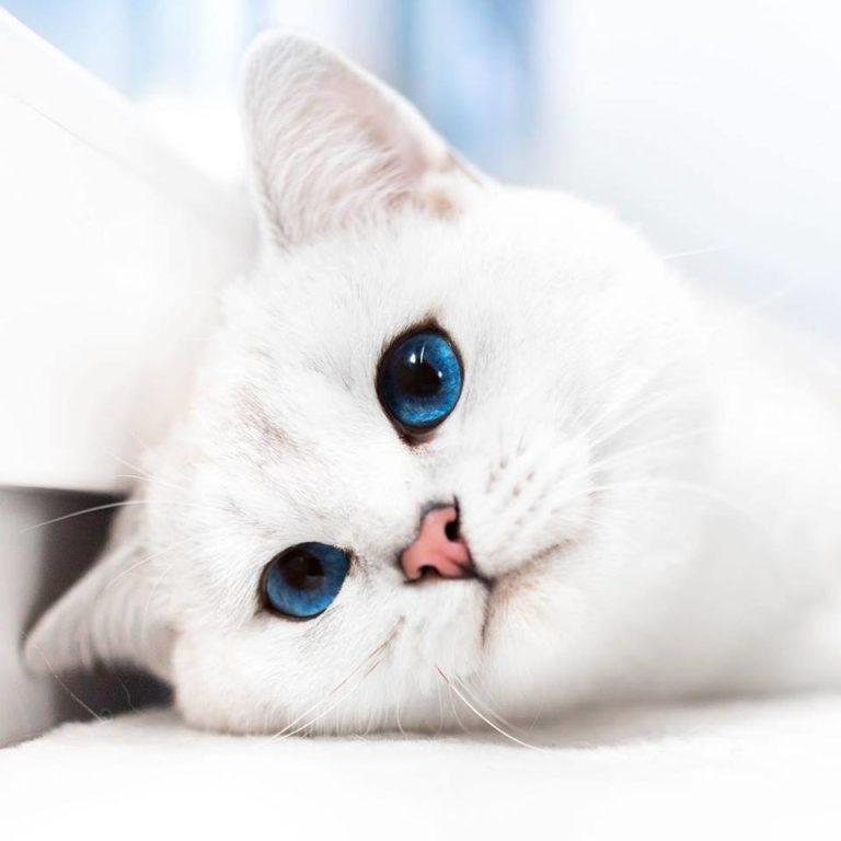 gatto lyo (10)